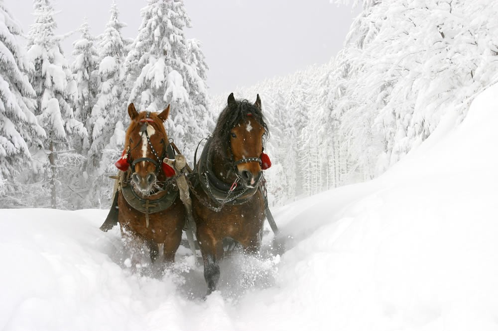 Horse drawn sleigh ride in Schladming